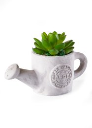 Succulente en pot arrosoir, bpc living