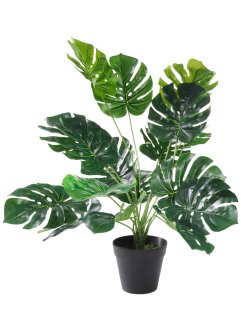 Kunstblume Monstera, bpc living bonprix collection