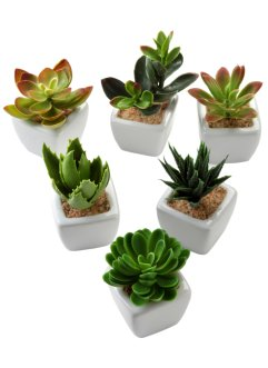 Mini-succulentes artificielles (Ens. 6 pces.), bpc living bonprix collection