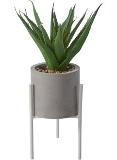 Plante décorative Aloe Vera, bpc living bonprix collection